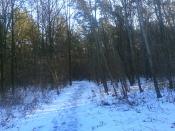 Śnieg, drzewa, śnieg, lód i... drzewa?