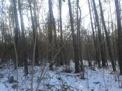 Lasu nie widzieliście?