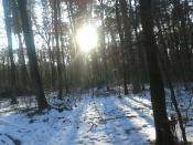 """Kiedy słońce czytało Jacka Dukaja: """"Nazwę sobie te promienie Słońca efektownym imieniem i stwierdzę, że oto istnieje taki anioł światła – bo inaczej kto by nas tu ogrzewał?"""" (Jacek Dukaj, Lód)."""