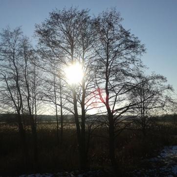 Kiedy słońce było śróddrzewne.