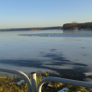 A oto ptacy wodni, wodnej wśród lodów zażywający kąpieli.