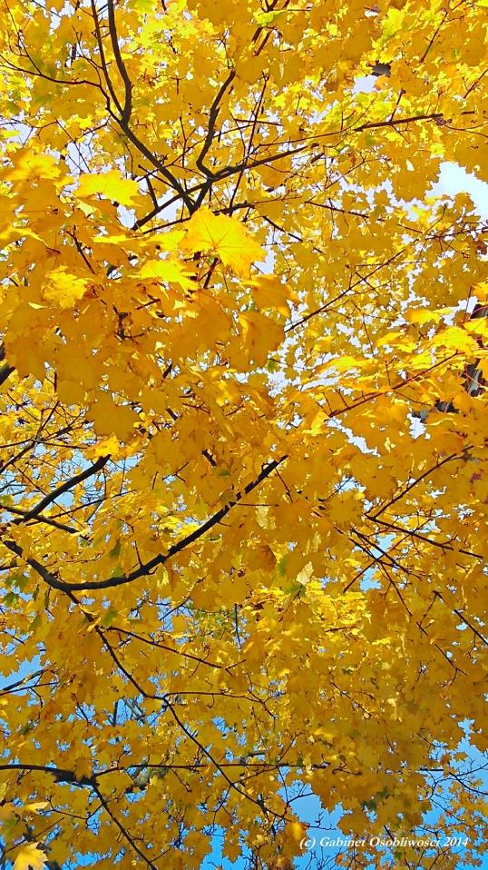 2014-10-15_10-15-26_HDR