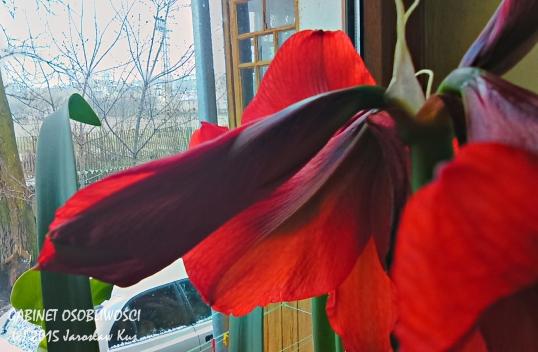 2015-04-03_08-58-25_HDR